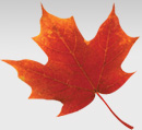 canada south festival newtork maple leaf
